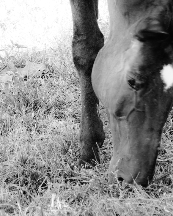 paard3