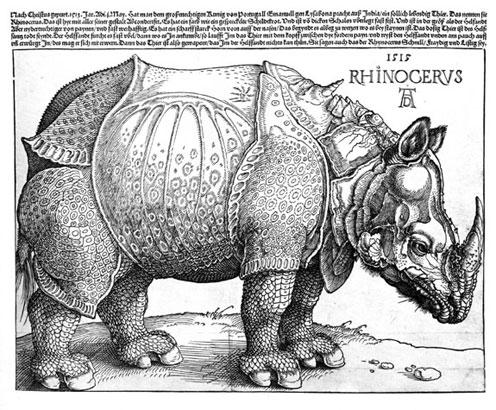 duerer rhino