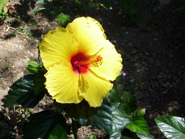 flowerpower2